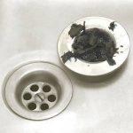 Grille Fine de Filtrage d'Evier Lavabo Filtre + Bouchon de la marque Générique image 1 produit